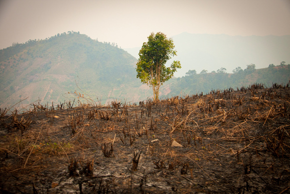 Scorched Earth - Madagascar